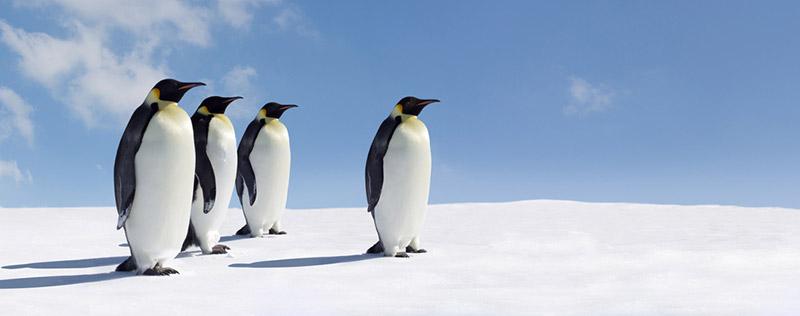Penguin 2014