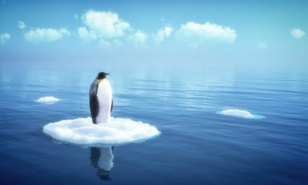 La sortie officielle de Google Penguin 2.0